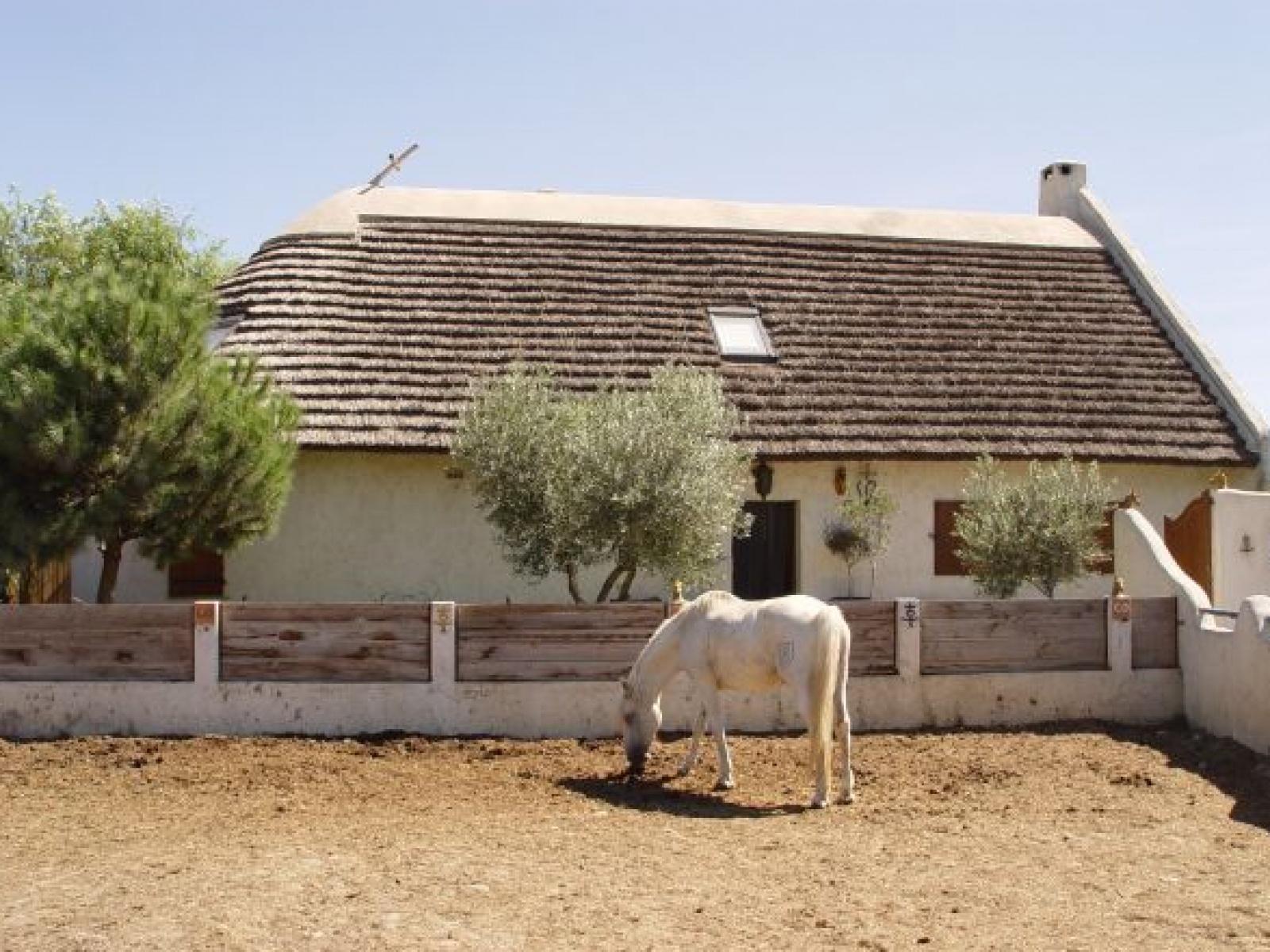 L incontournable cheval Camarguais ... c9575d0c9d6