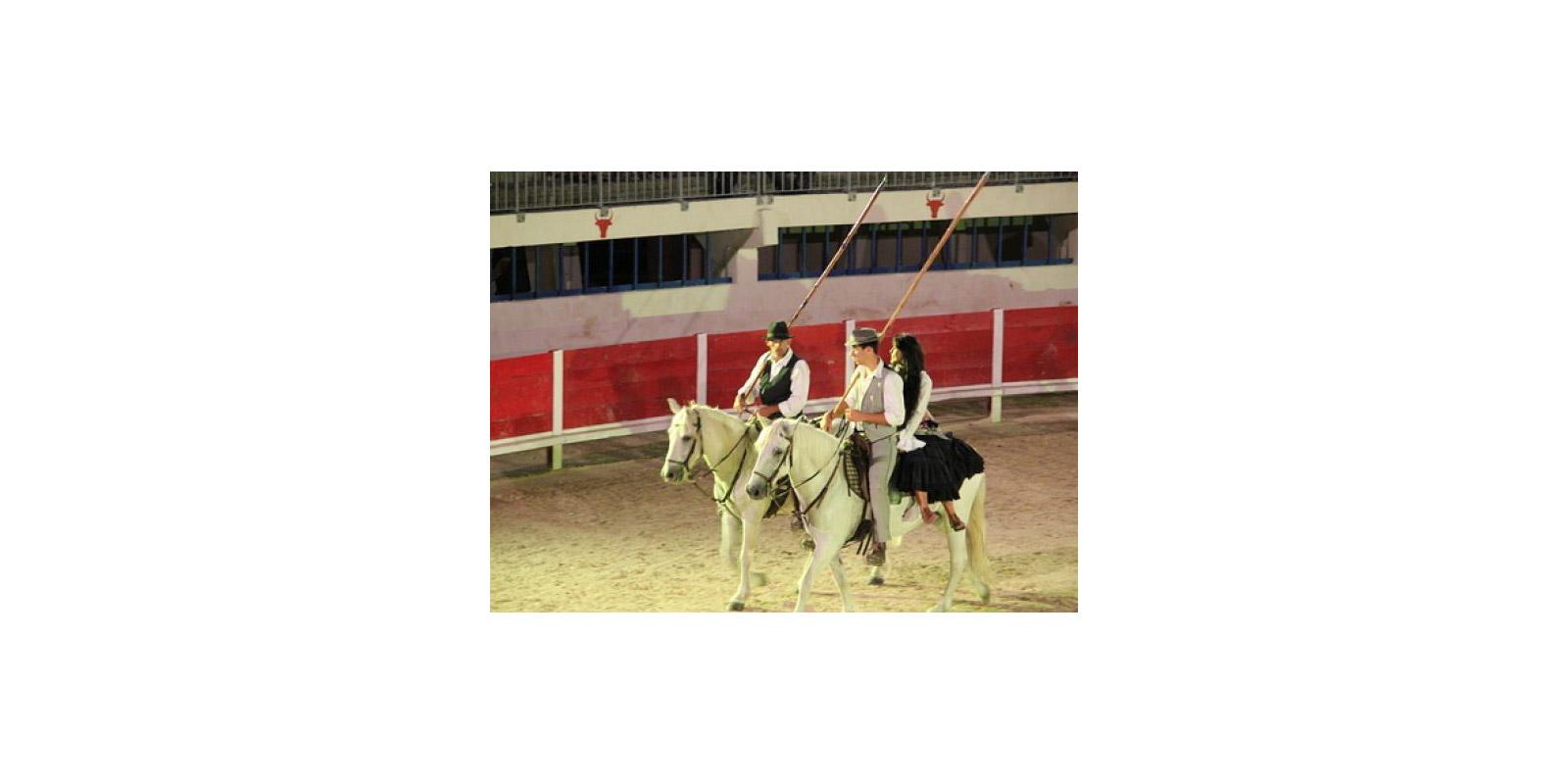 L incontournable cheval Camarguais. Spectacle équestre aux arènes 45851270df9