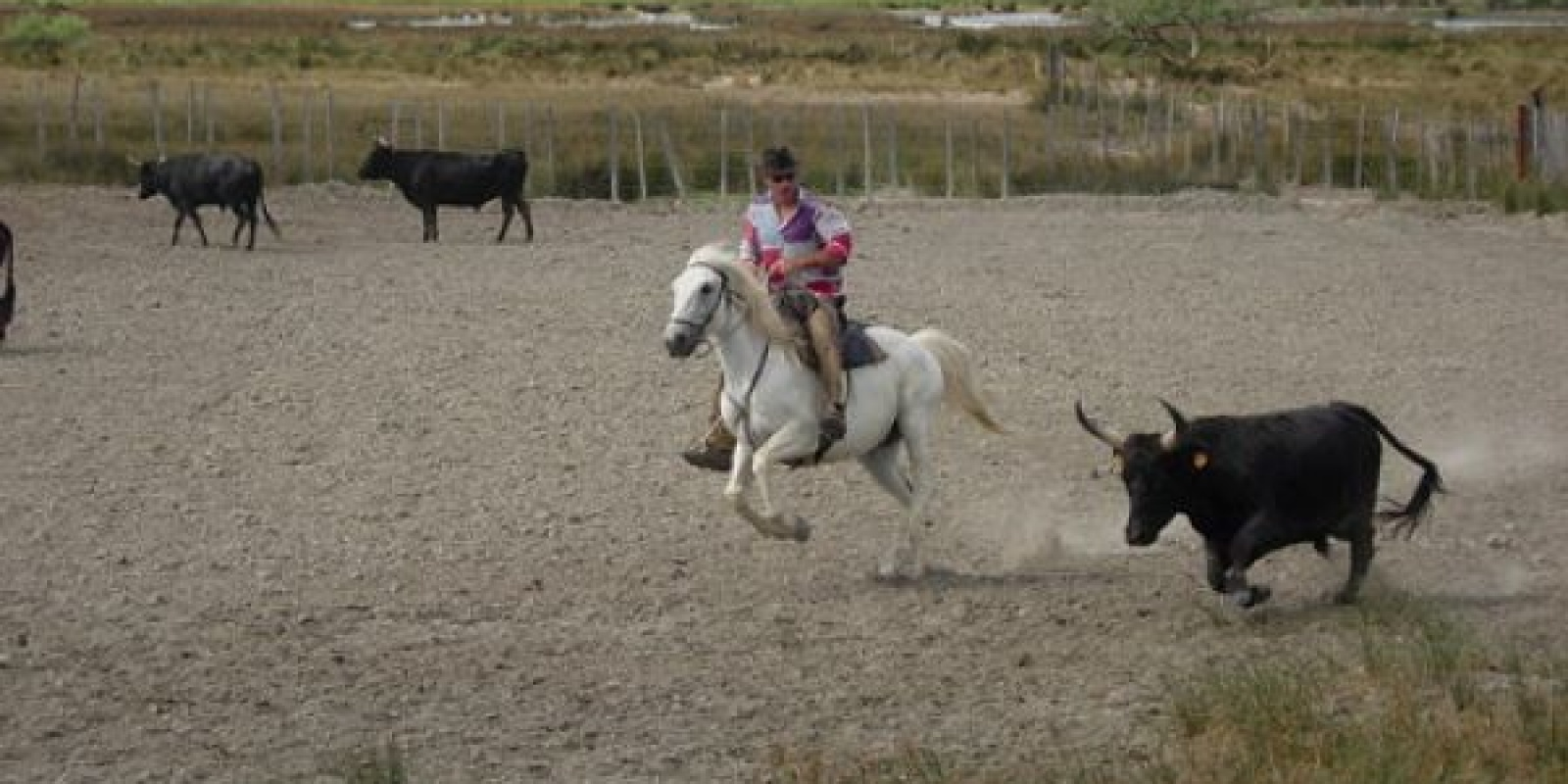 La tradition Camarguaise